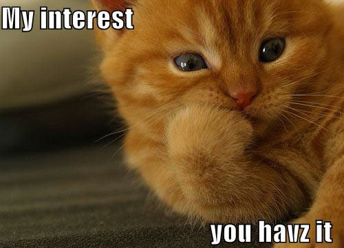 interested-cat